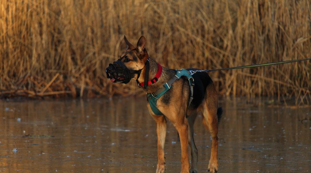 éducation chien agressif